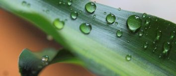 Wasser: Unser aller Lebenselixier